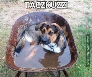 Taczkuzzi