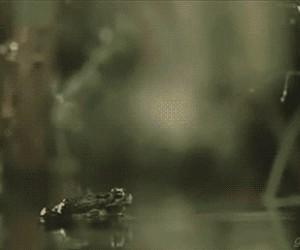Ten moment, gdy żaba zorientowała się, że ma przeje*ane...