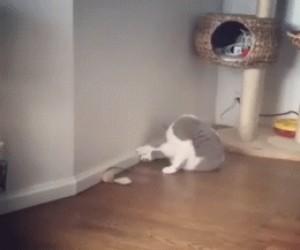 Brutalny pojedynek pomiędzy dwoma kotami