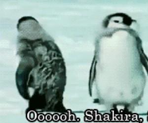 Pingwin myśli, że jest gwiazdą pop