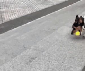 Autonomiczny pies