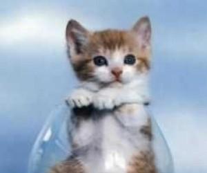 Kotek w lampce