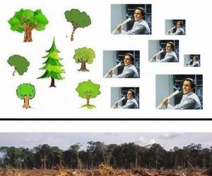 Nie wycinajcie lasów!