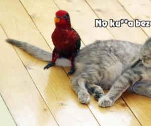 Papuga drażni kota
