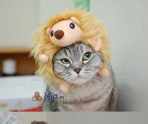 Koty w czapkach