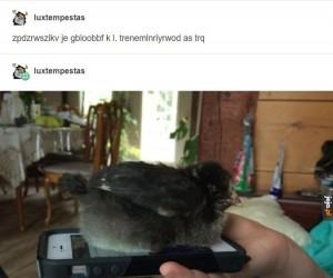 Specjalna wiadomość od ptaszka