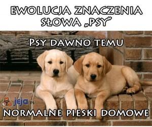 """Ewolucja znaczenia słowa """"psy"""""""