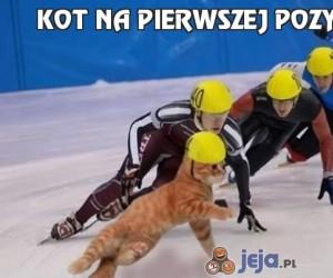 Kot na pierwszej pozycji!