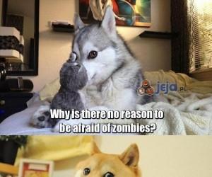 Dlaczego nie musimy bać się zombie?