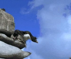 Uwaga, pingwiiiin!