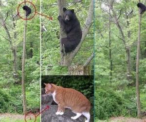 Miś i kot