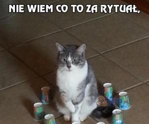 Poradnik małego egzorcysty - wyizoluj kota