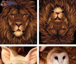 Jakiego widzisz zwierzaka?