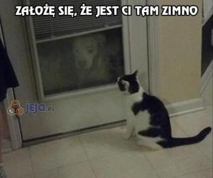 Kot, wpuść mnie!