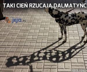 Taki cień rzucają dalmatyńczyki