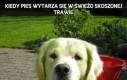 Kiedy pies wytarza się w świeżo skoszonej trawie