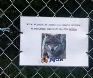 By podziwiać wilki udaj się do...
