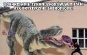 Dokarmianie Tyranozaurów w mieście rygorystycznie zabronione!