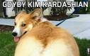 Gdyby Kim Kardashian była psem