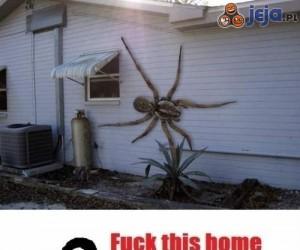 Malutki pajączek