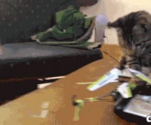 Koty są płochliwe