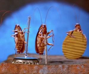 Kapela karaluchów