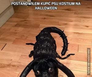 Postanowiłem kupić psu kostium na Halloween