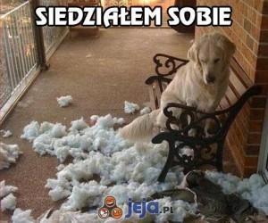Pies kłamczuch