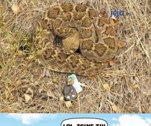 Dzięki, panie wężu!