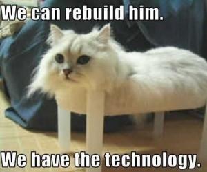 Odtworzenie kota