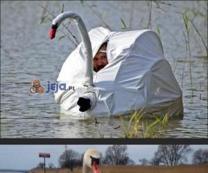 Przyczajony fotograf ofiarą Photoshopa