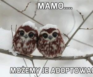 Mamo....