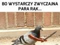 """Ptaszki i """"zręczny"""" Photoshop"""