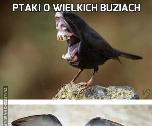 Ptaki o wielkich buziach
