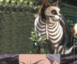 Ale wychudzony, kości widać!