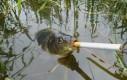Rybka z fajkiem