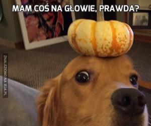 Mam coś na głowie, prawda?
