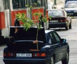 Mistrzowie załadunku - drzewko