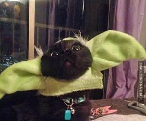 Psy i koty w kostiumach z Gwiezdnych Wojen
