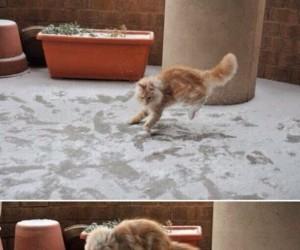 Gdy kot pierwszy raz ma styczność ze śniegiem
