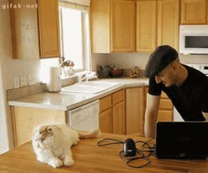 Najlepsza broń na świecie - wyrzutnia kotów