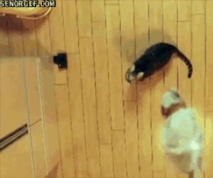 Karate kot