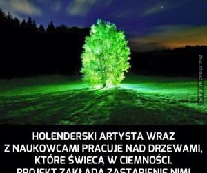 Święcące drzewa