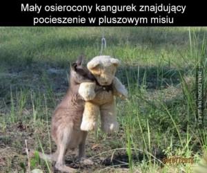 Osierocony kangurek