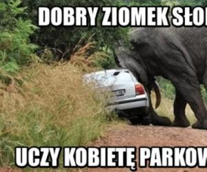 Parkowanie równoległe z asystą