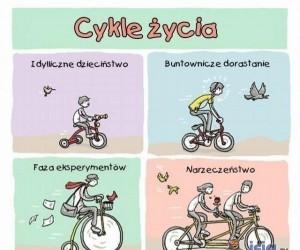 Cykle życie