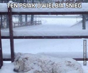 Ten psiak uwielbia śnieg