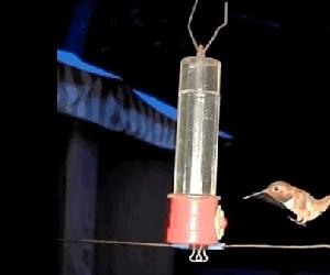 Koliber próbuje wylądować