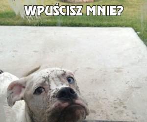 Wpuścisz mnie?