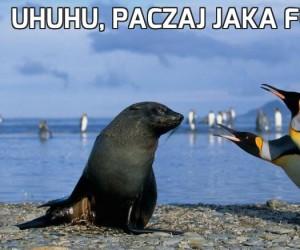 Uhuhu, paczaj jaka foczka!